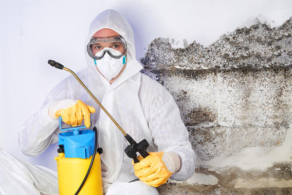 Water Damage Restoration: What to Do When Mould is Found in Your Home
