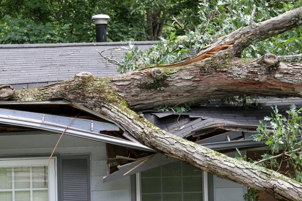 Batten Down the Hatches: 7 Ways to Protect Your Property from Strong Winds